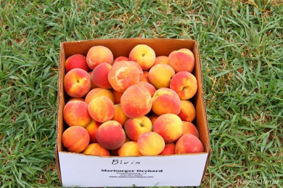 Marburger Peaches