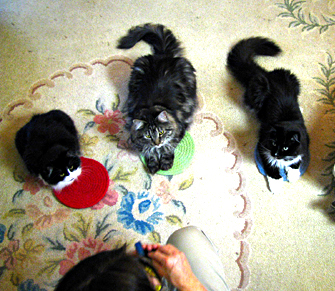 Cat clan