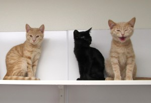 Lapis, Polly & Flint @ Happy Cats Haven