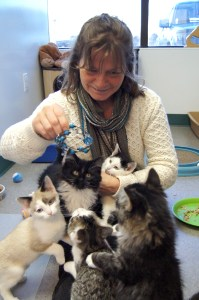 Sue & her foster kittens