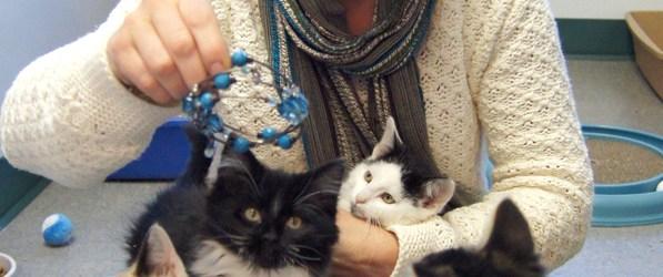 Sue & her foster kittens