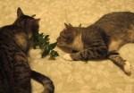 BooBoo Woody & Catnip