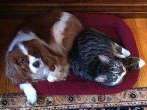 WIlson & Riley @ Home