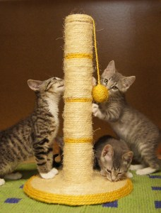 Kittens meet the scratcher