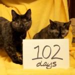 Louisa & Christina @ Happy Cats