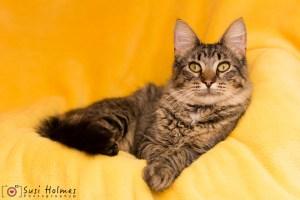 Bob @ Happy Cats