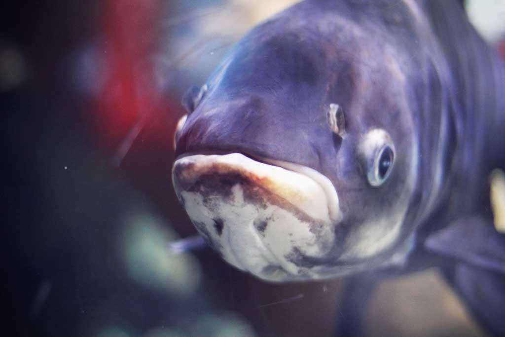 Aquarium-Dubai-05