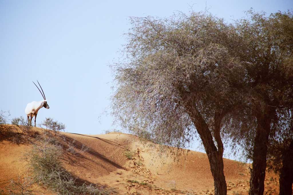 Banyan_tree-Activites-28