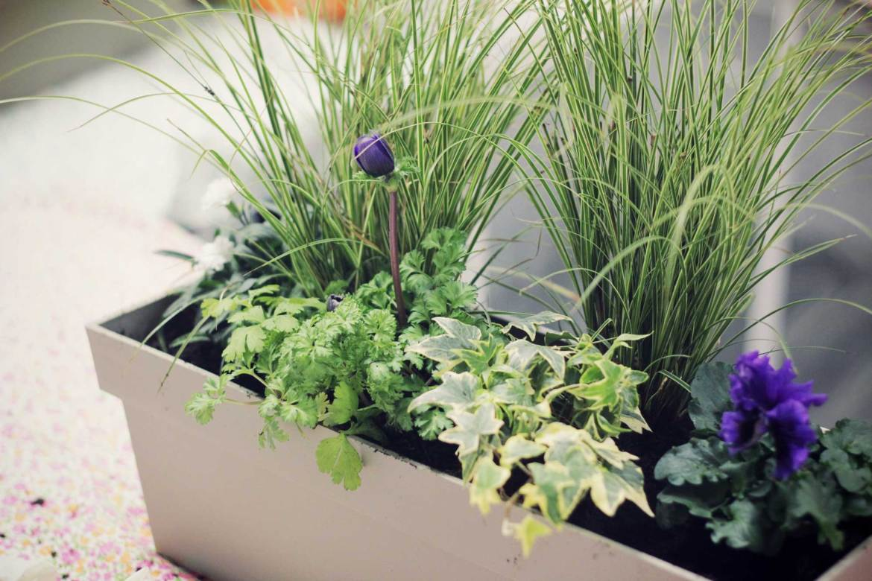 Atelier de jardinage urbain, Brin de Jardin