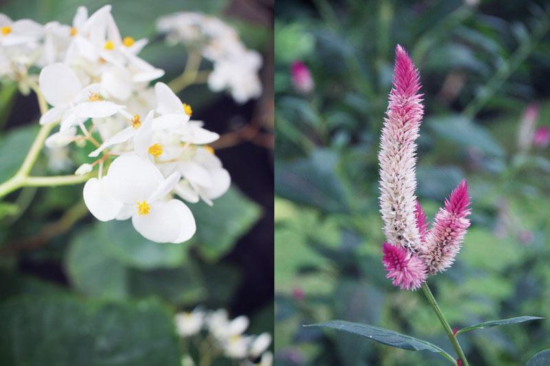 jardin-botanique-guadeloupe-deshaies-2-03