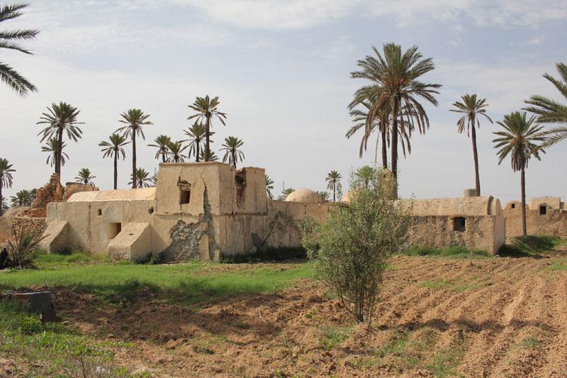 terre-djerba-tunisie-02