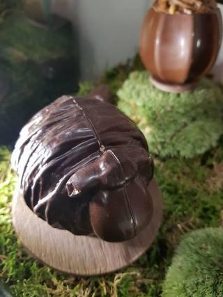 Shokoro-Edwart-Chocolatier-01