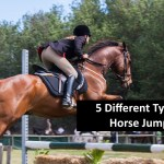 5 Different Types Of Horse Jumps Horse Jumping Barn Comly Sport Horses