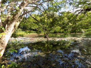 This photo shows one of the lakes at Pointe-a-Pierre Wildfowl Trust, Trinidad with the trees reflected in the still water