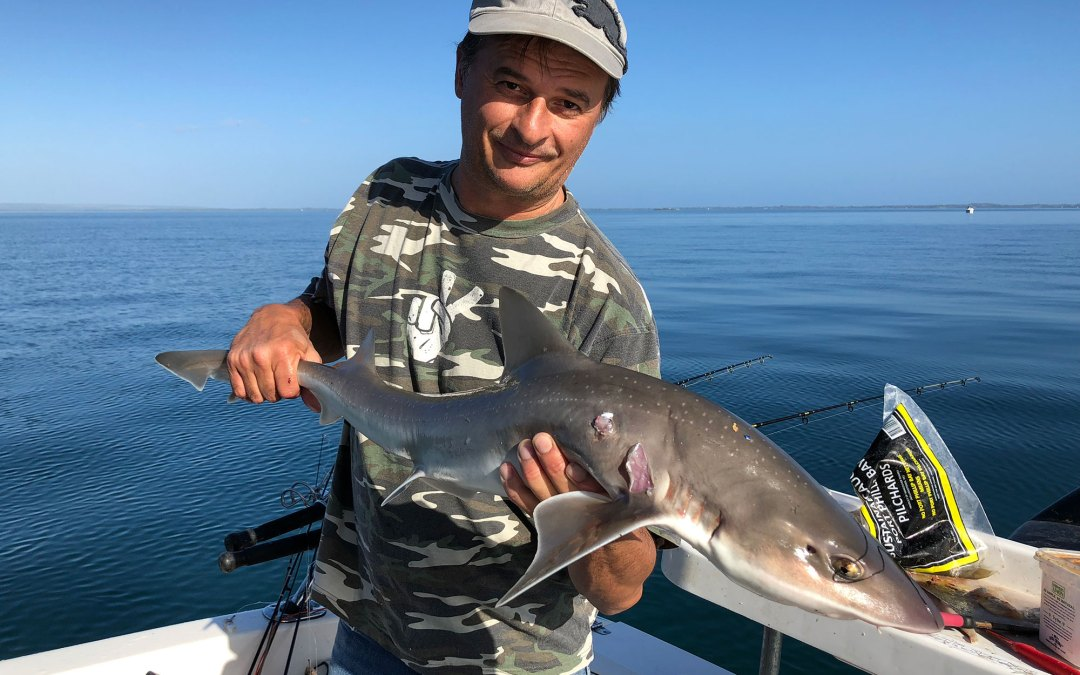 happy fisherman 2018 may 8th mud island gummy shark