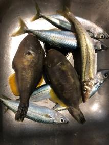 2019-Jan-16-happy-fisherman-fishing-portarlington