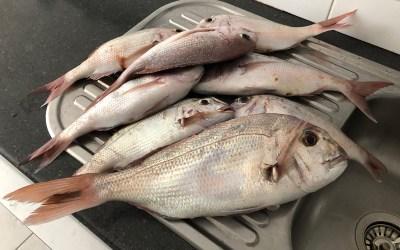 2019 Feb 25 fishing Portarlington