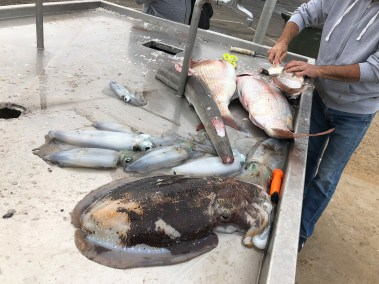 happy-fisherman-fishing-mud-island