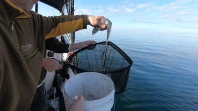 happy-fisherman-fishing-st-leonards
