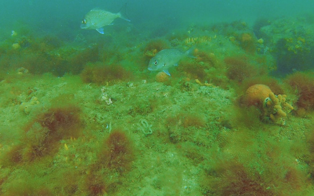 Underwater footage from Altona – Sep 2019