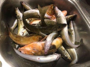 2019-oct-1st-happy-fisherman-fishing-mud-island-12