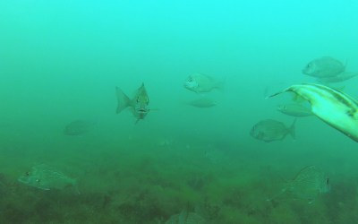 2019 December 14th – Quick Underwater video at Point Cook
