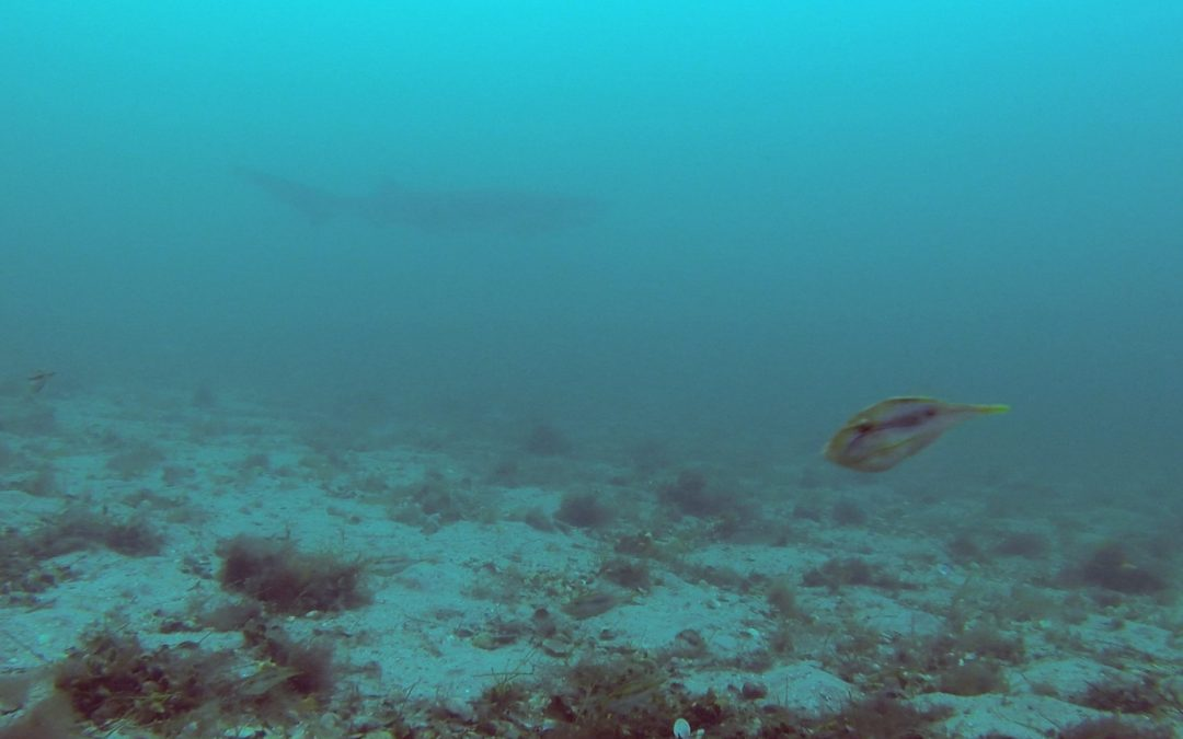 2020 July 16th – Underwater footage at St Leonards