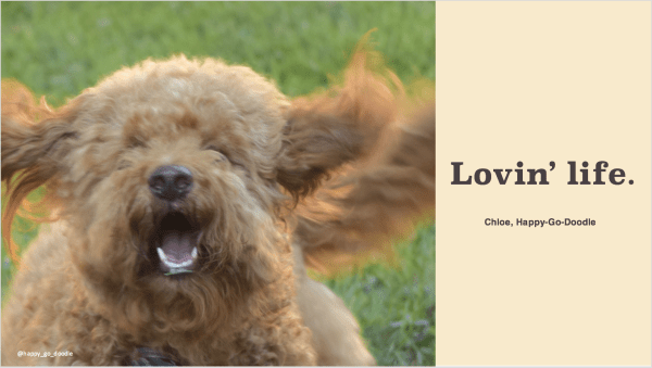 Close-up red goldendoodle dog running with ears flying and happy smile and copy loving' life