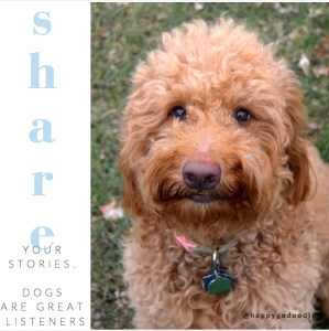 Red goldendoodle looking up at camera with quote about dogs as listeners