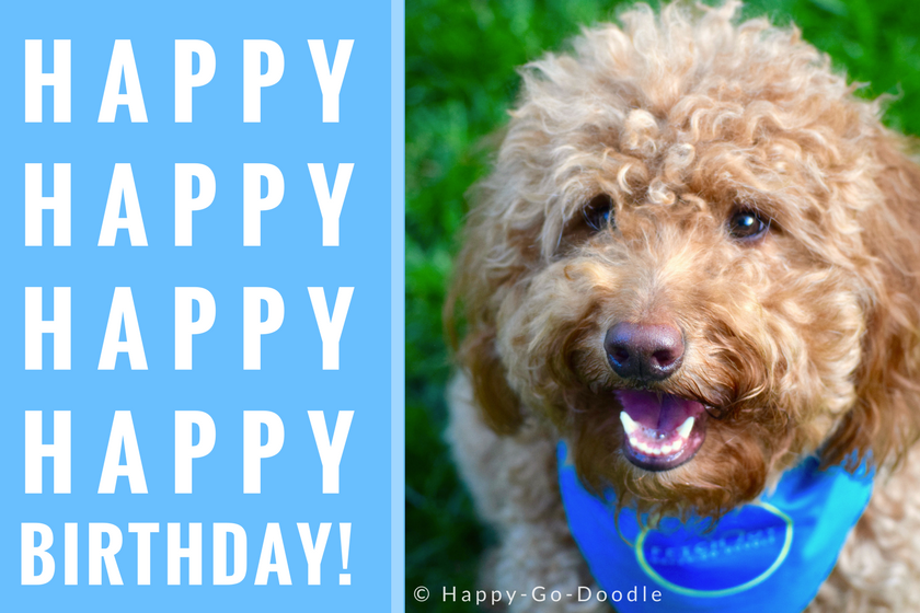 Red goldendoodle dog with smiley face and wearing dog bandana sitting on green grass with Happy Happy Birthday message
