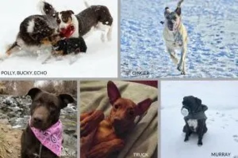 Happy-Go-Doodle's Dogs Love Winter Games photo contest entries of dogs in snow