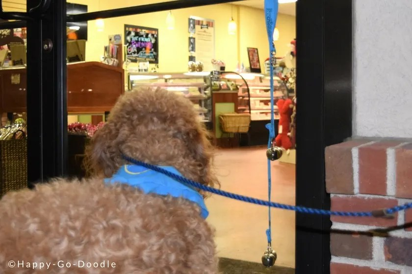 Goldendoodle Chloe peering into window at Kansas City's dog-friendly Three Dog Bakery