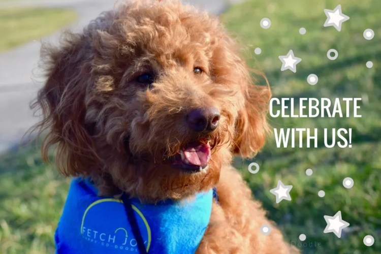 BlogPaws Conference Celebrate with us title and red goldendoodle dog