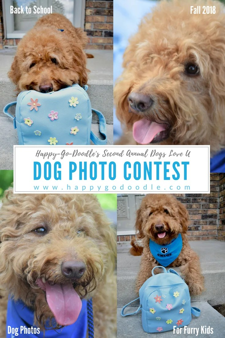 collage of dogs and title dog photo contest and subtitle Happy-Go-Doodle's Second Annual and website www.happygodoodle.com