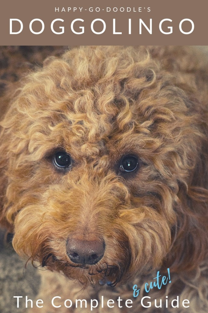 Title DoggoLingo the complete and cute guide and red goldendoodle dog's face photo