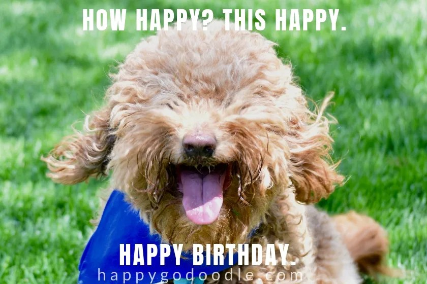 happy birthday dog meme of smiley dog face in photo with caption how happy this happy