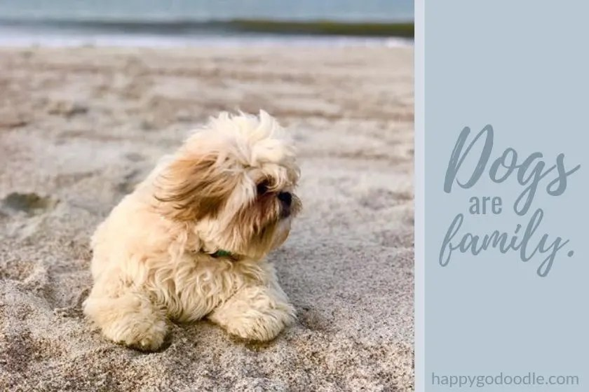 photo of dog on amelia island beach