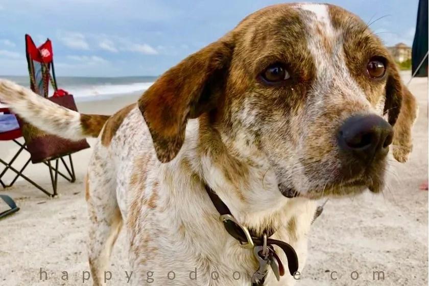 photo dog on beach