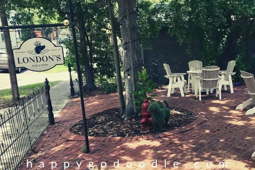 courtyard seating area at london's is a popular thing to do in amelia island for dog lovers