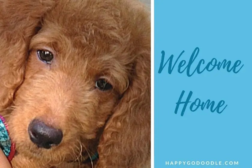 Goldendoodle puppy and title welcome home