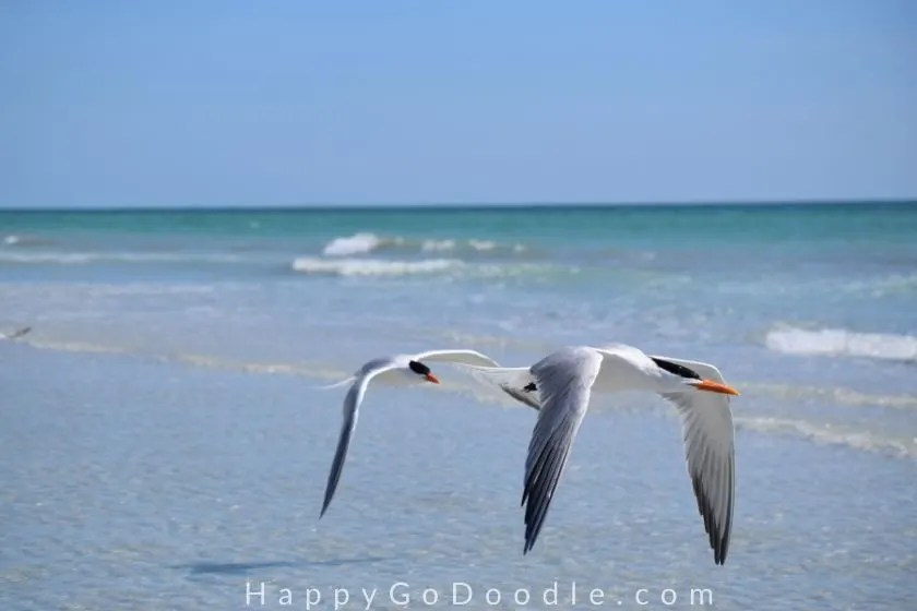 two seagulls flying low over the ocean waves as an example of things that make me happy, photo.