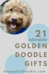 adult red goldendoodle's face and title 21 adorable goldendoodle gifts, photo