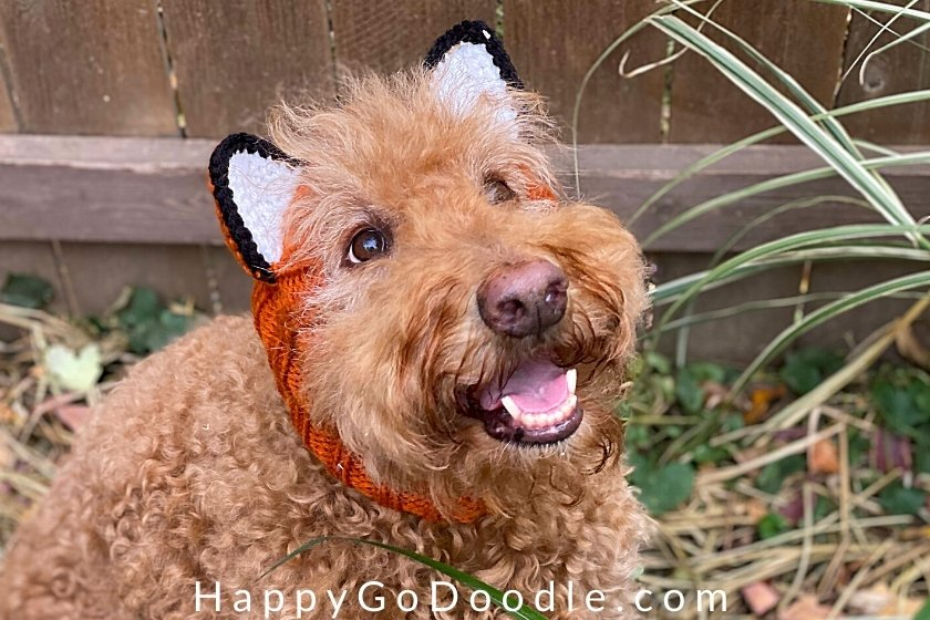 Fluffy Goldendoodle dog wearing a Zoo Snoods head and neck warmer that looks like a fox, photo
