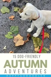 white puppy standing on fall leaves and title 15-dog friendly autumn adventures, photo