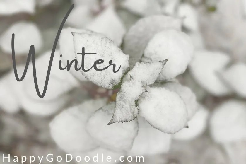dusting of snow on the leaves of a green plant and the word Winter as a nature-inspired dog name, photo