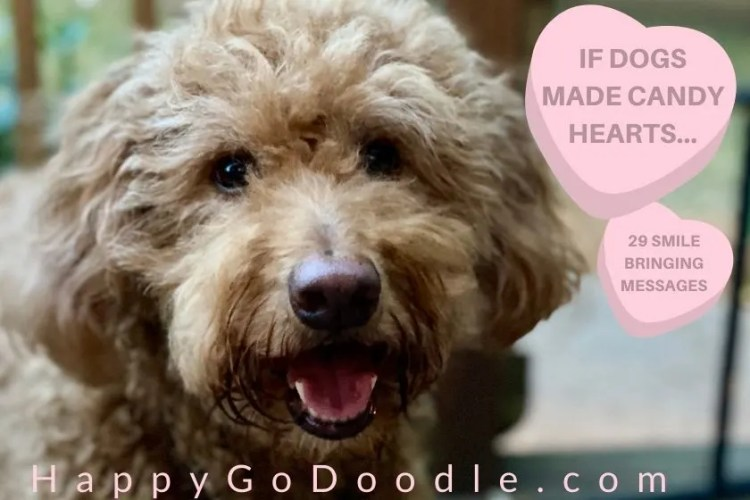 """Red Goldendoodle dog looking happy and title """"If Dogs Made Candy Hearts,"""" photo"""