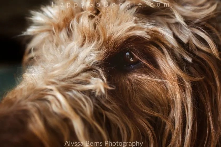 Sideview of dog's face and long eye lashes, photo