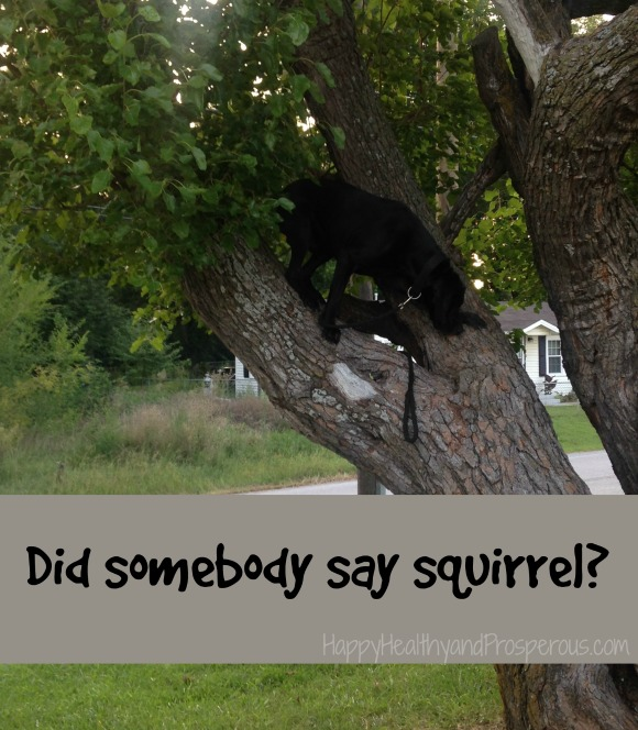 Funny Friday: Dog in Tree...Did somebody say squirrel?