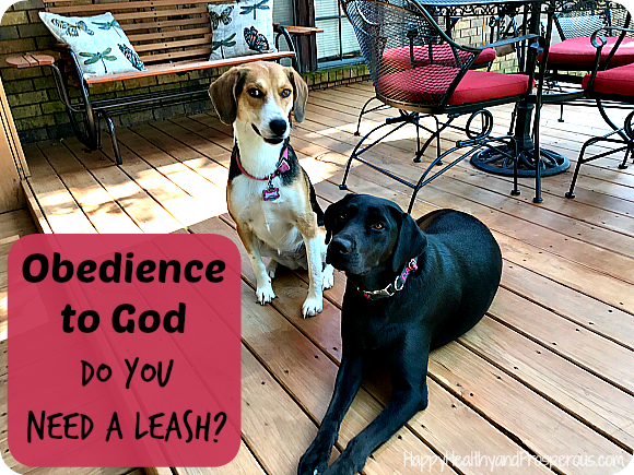 Obedience to God...I want to follow and obey God easily, willingly, and immediately...to be the type of person that does what I need to without a bridle or leash or tether to keep me in check or to make me go where I need to be.