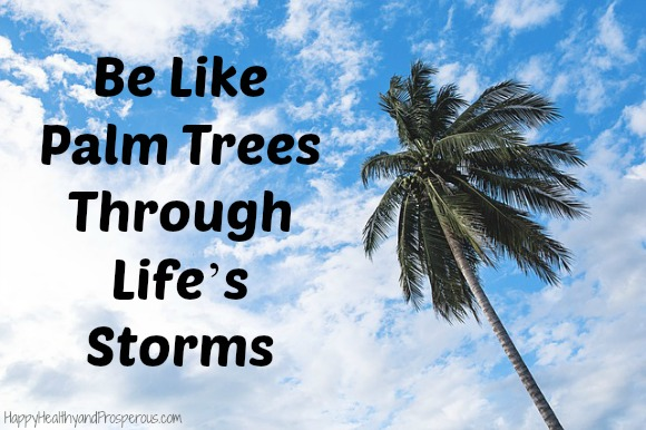 Be Like Palm Trees Through Life's Storms